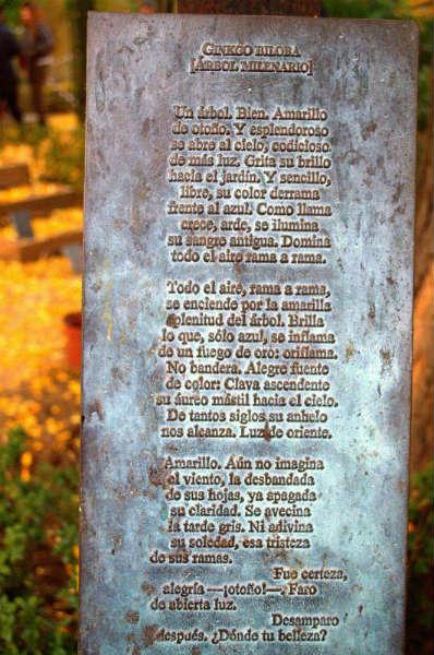 Poema de Elena Martín Vivaldi al Ginkgo.