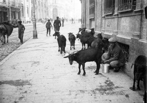 Ordeñando cabras en la Calle Reyes Católicos en 1930