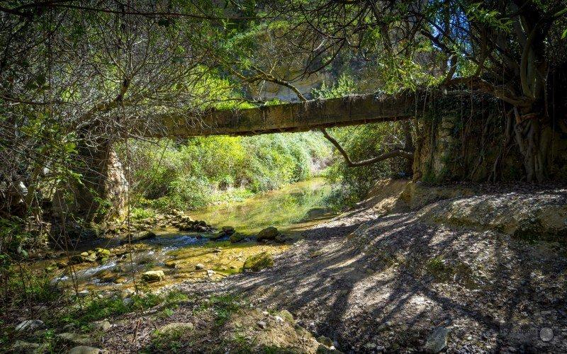 Alhama de Granada bosque